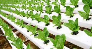 Water For Hydroponic Farmers